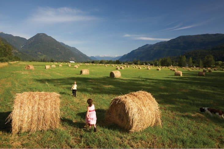 Pemberton Hay Bales Summer